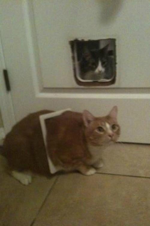 2 gatos en una puerta