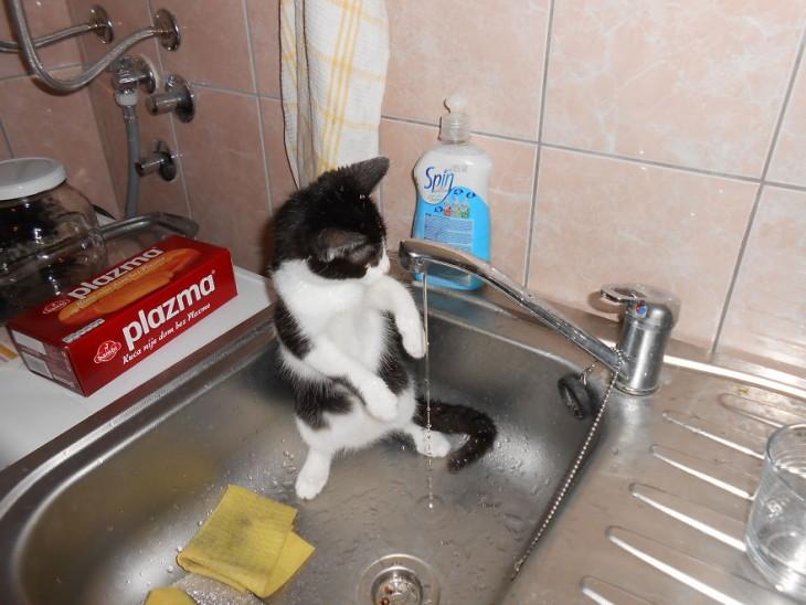 Gatos que aman bañarse (1)