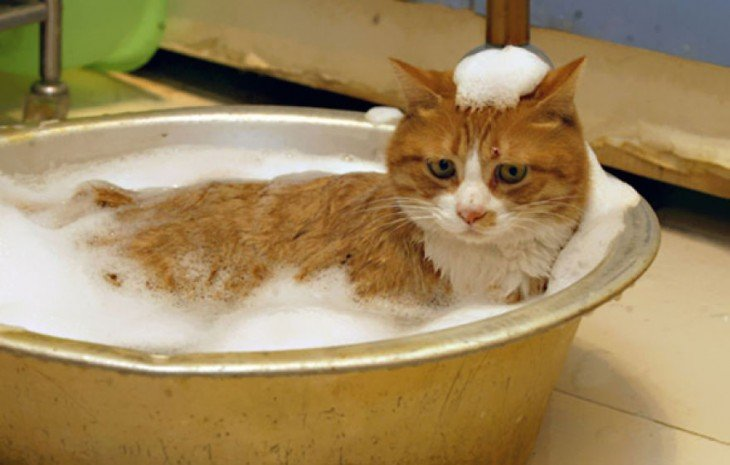 Gatos que aman bañarse (11)