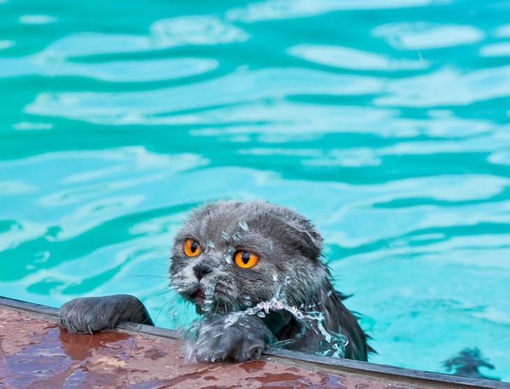Gatos que aman bañarse (2)
