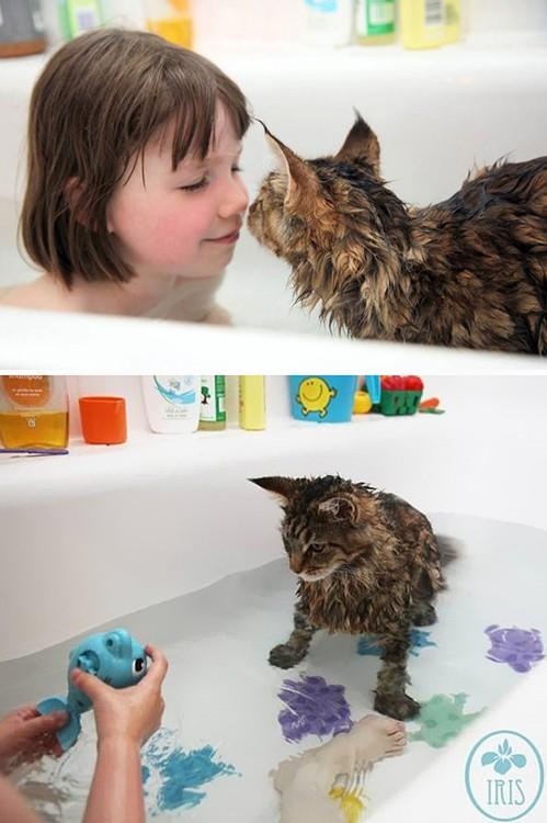 Gatos que aman bañarse (20)