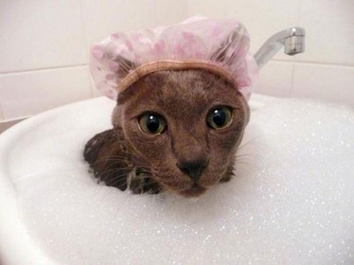 Gatos que aman bañarse (6)