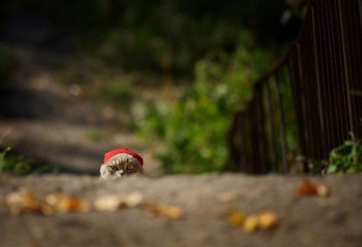 Gato con gorra roja