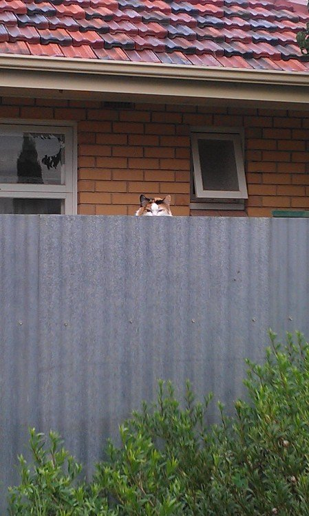 Gato mirando tras la medianera
