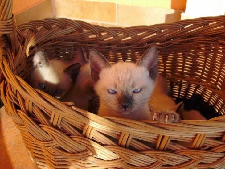 Gatos que pueden matarte (3)