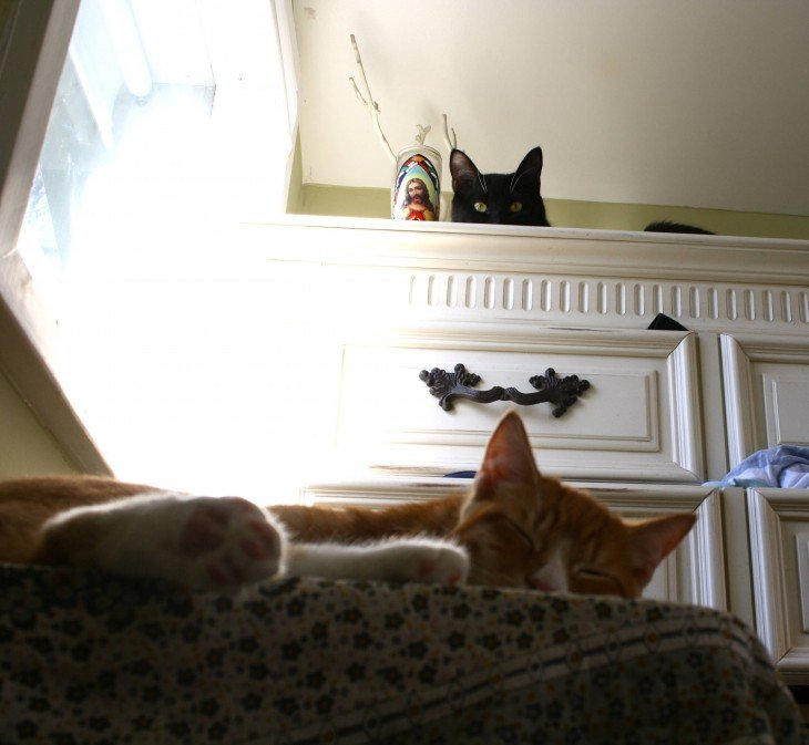 gato observando otro gato