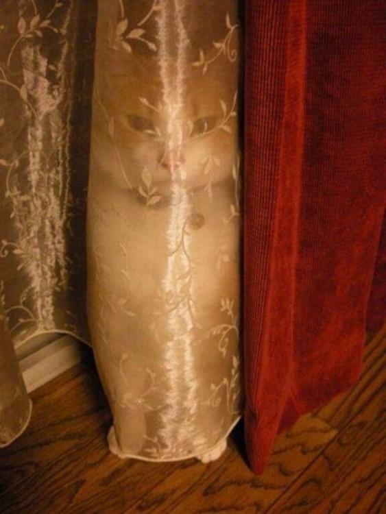 Gato escondido dentro de una cortina