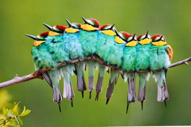 Pájaros sobre una rama acomodados en una fila simulando formar una oruga