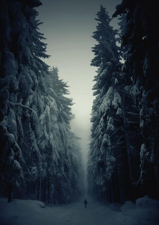 Hombre caminando por un camino que divide un bosque con enormes pinos, cubierto por nieve