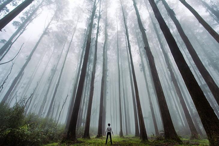 Hombre en medio de un bosque alrededor de árboles enormes