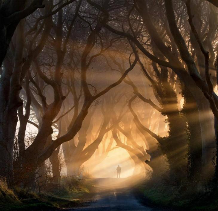 Hombre a lo lejos en un camino en medio de un bosque lleno de grandes árboles secos