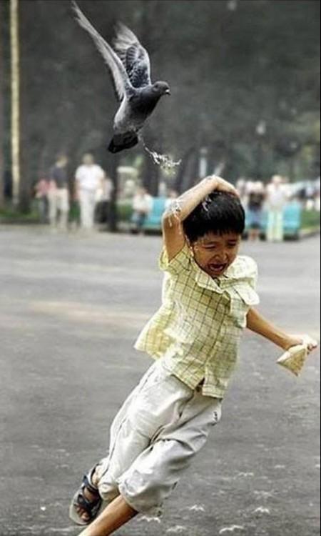Paloma cagando a un niño en la cabeza