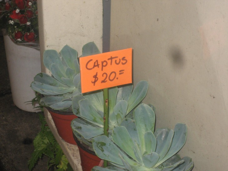 Cactus con un letrero sobre ellos donde indica su precio