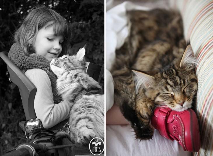 Imagen con dos divisiones con una niña sobre una banca y el gato en su pie