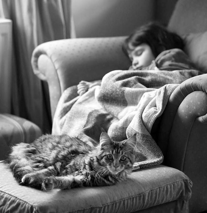 Niña dormida sobre un sofá y el gato a sus pies recostado