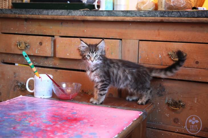 Gato sobre una mesa con pinturas