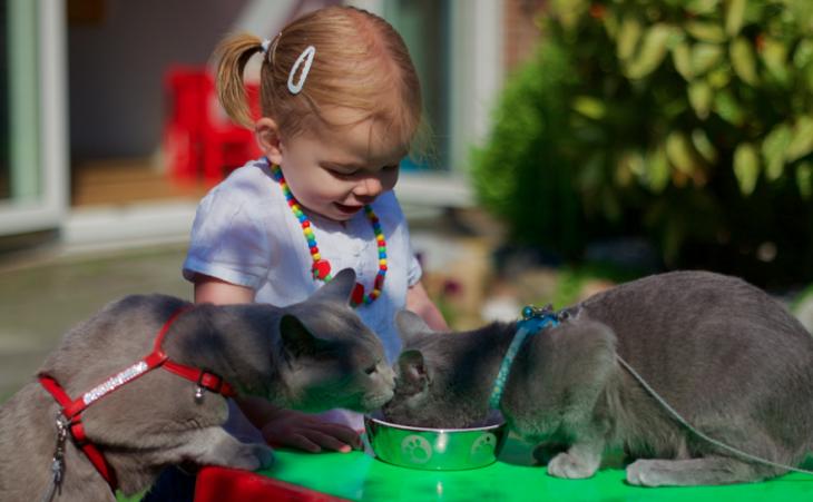 Niña frente a dos gatos que comen de un plato