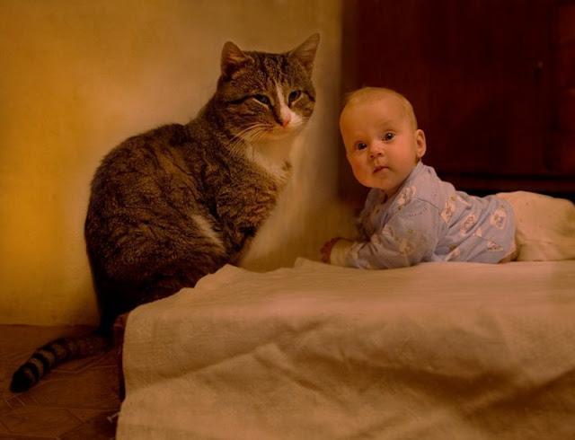 Niño y gato acostados volteando hacia la cámara