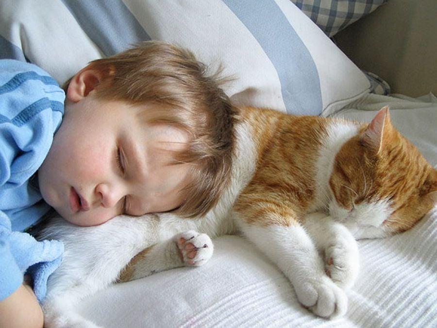 30 tiernas fotografías de niños con sus gatos