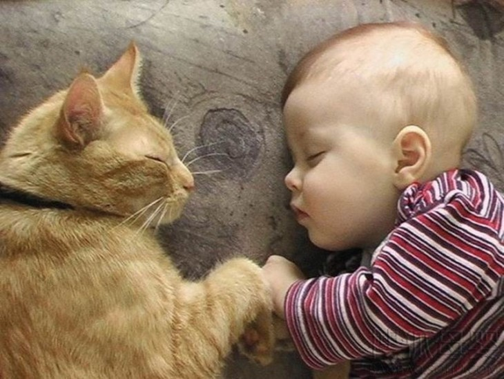 Un niño y su gato dormidos frente a frente