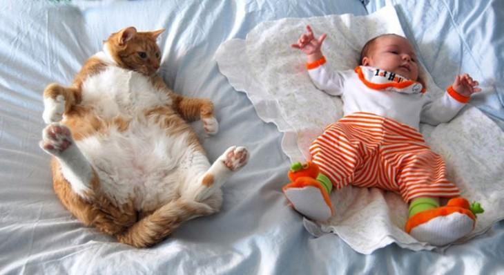 Niño y gato acostados en una cama con la misma pose