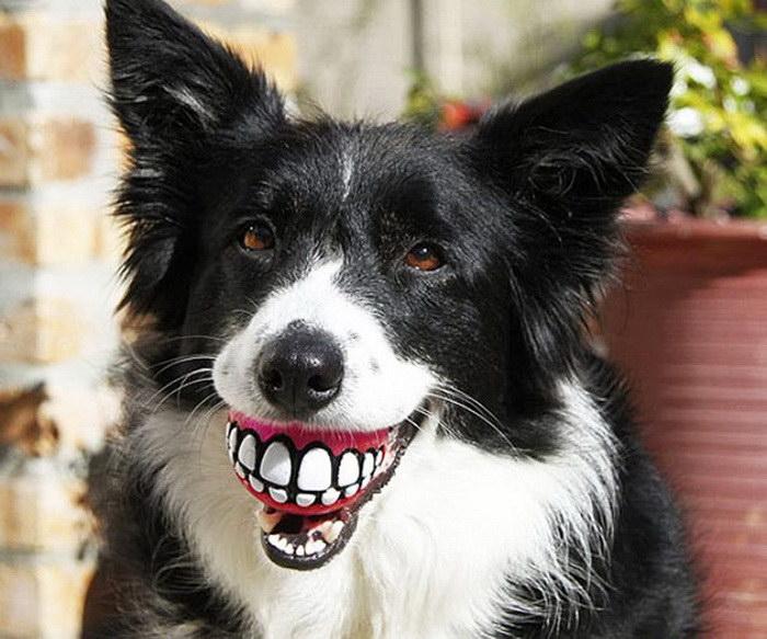 Perros con juguetes graciosos (11)