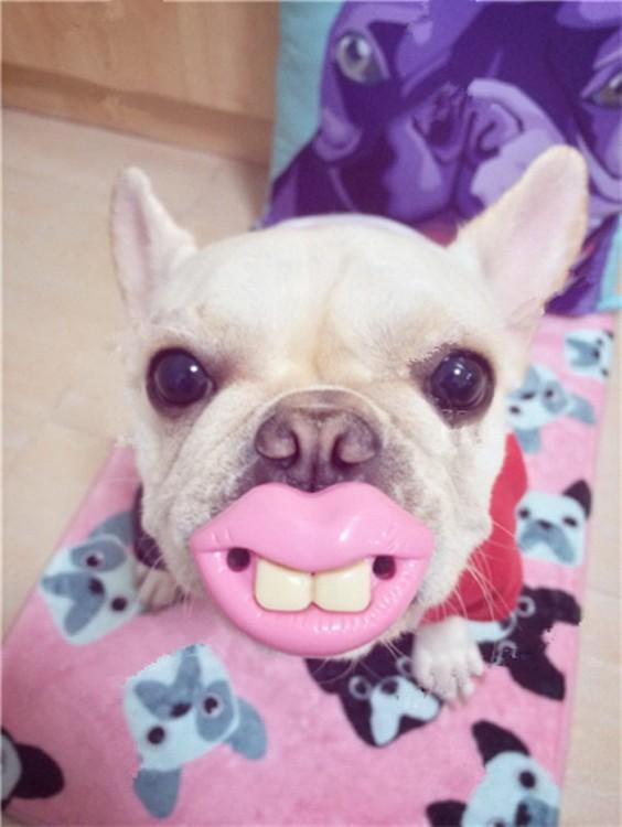 Perros con juguetes graciosos (14)