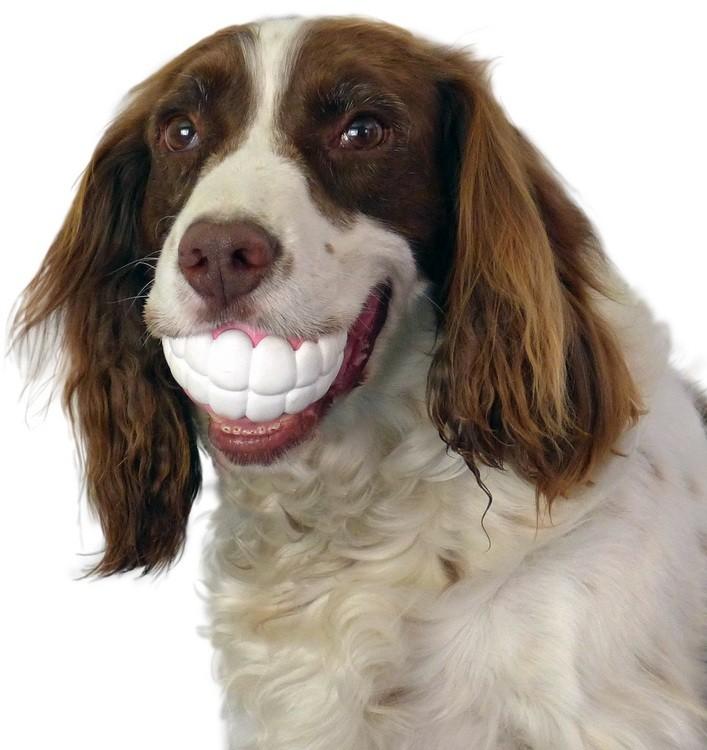 Perros con juguetes graciosos (15)