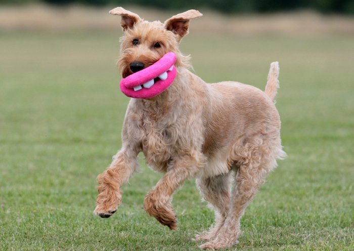 Dog Lips Toy That Brings A Goofy Smile To Your Dog