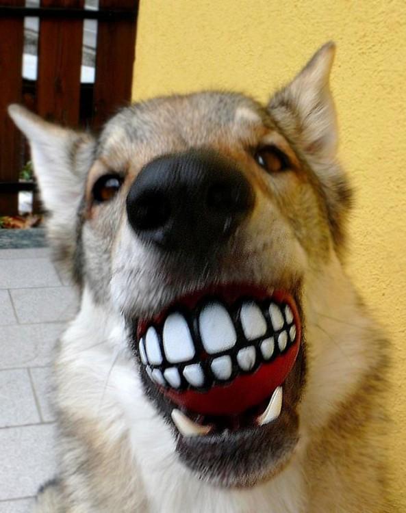 Perros con juguetes graciosos (2)