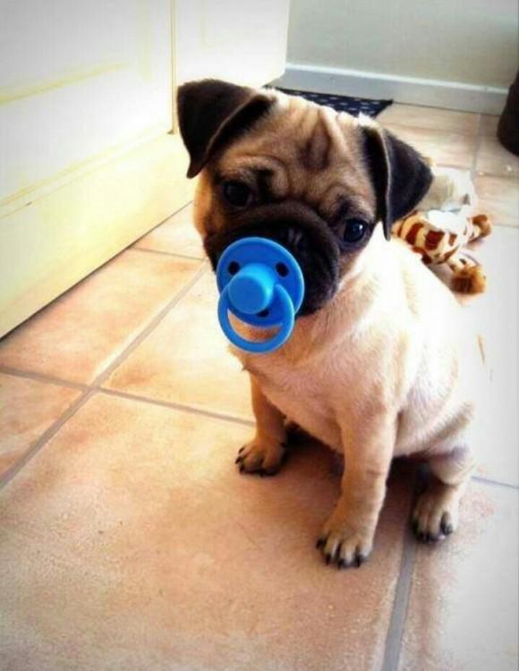Perros con juguetes graciosos (20)