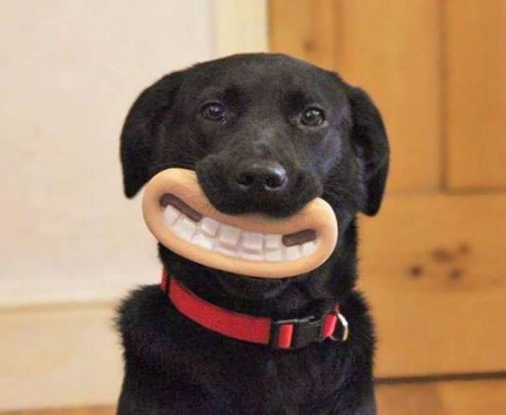 Perros con juguetes graciosos (21)