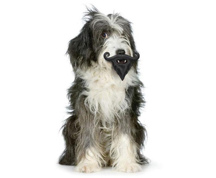 Perros con juguetes graciosos (22)