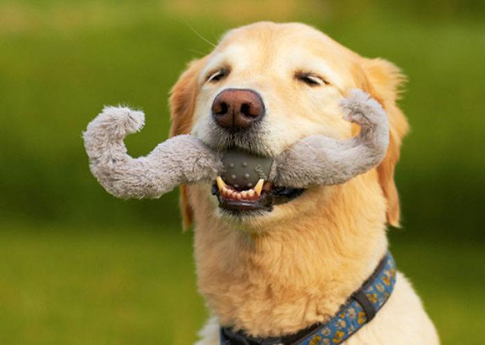 Perros con juguetes graciosos (23)