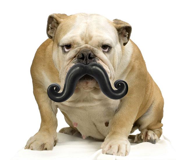 Perros con juguetes graciosos (6)