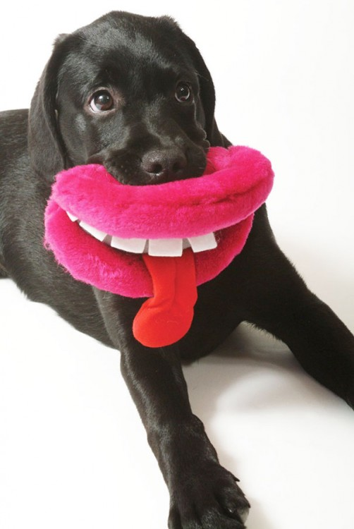 Perros con juguetes graciosos (8)