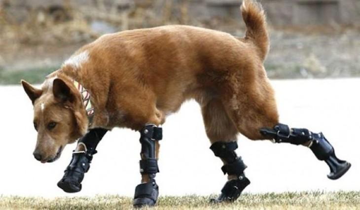 Protesis (13)