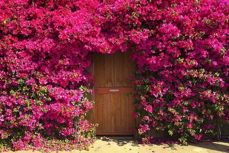 Puerta que se encuentra rodeada de flores en color rosa