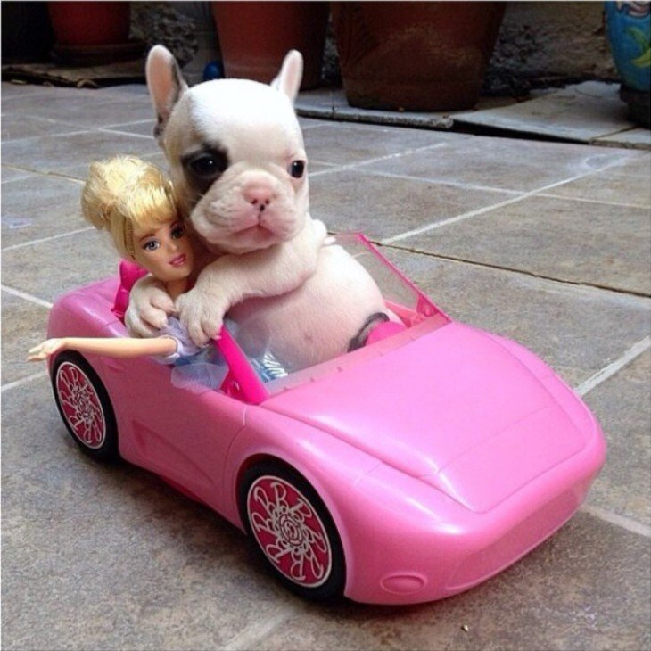 Perrito en carro de barbie