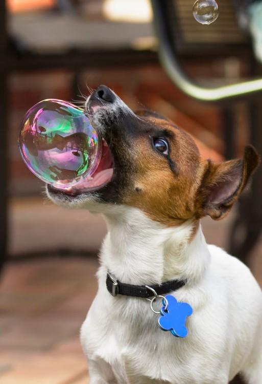 perro mordiendo una burbuja de jabón