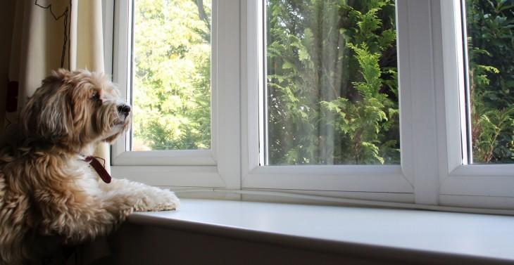 Perro observando por la ventana