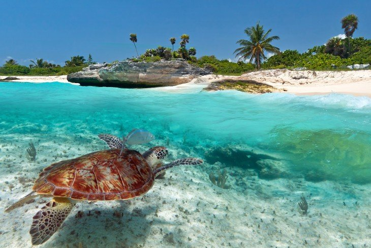 Tortuga marina tomada en la Riviera Maya en Quintana Roo México