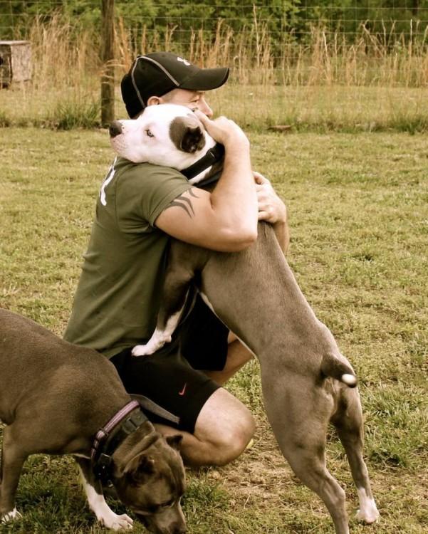 Razones por las que no deberías tener un pitbull (10)