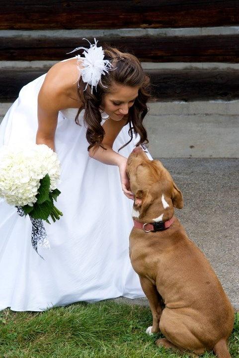 Mujer con vestido de novia junto a su perro pitbull