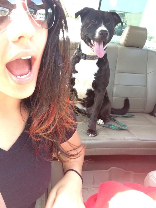 Fotografía en un carro de una mujer con su perro pitbull