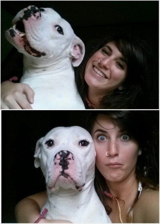 Fotos de perro pitbull y su dueña sonriendo y serios