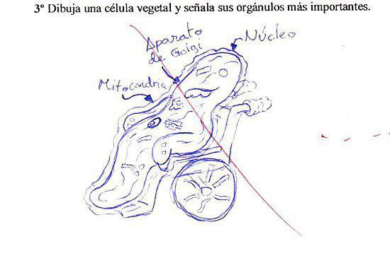 Célula en estado vegetal