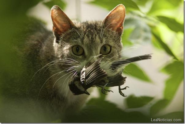 Gato con pajarito en la boca