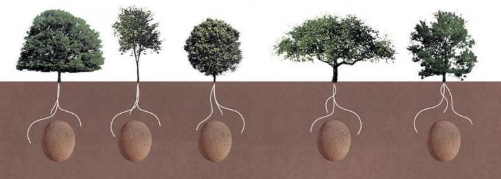 Catálogo de árboles  del proyecto capsula mundi