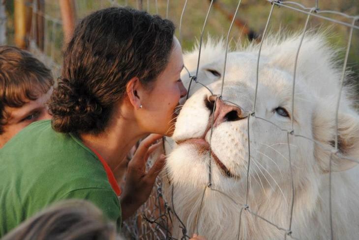 leon blanco con una mujer